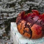 70lb Manzanita Burl Bowl