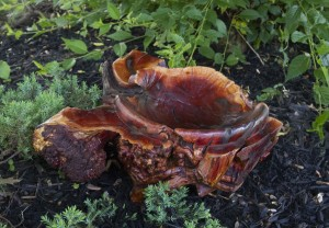 Manzanita Burl Abstract Bowl