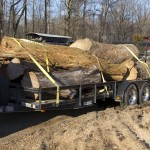 Trailer load of osage, walnut, and maple