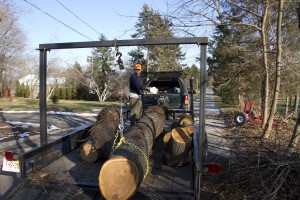 Our Yarder at work loading cherry logs